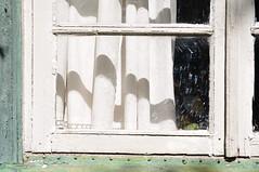 Aken (anuwintschalek) Tags: nikond90 40mm micronikkor 2017 july suvi sommer summer aed garden garten tallinn eesti estland estonia pääsküla nõmme veranda aken window fenster valge kardin vorhang white weiss hommik hommikuvalgus morning morgen morgensonne morningsun