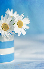 Daisies (borealnz) Tags: daisies whitedaisies jug striped blue white
