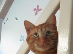 Mon ami Wilburgh (elisabeth D.) Tags: chat chattigré félin