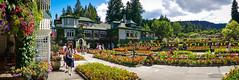 The Butchart Gardens (どこでもいっしょ) Tags: thebutchartgardens victoria canada summer panorama panasonicdmczs100