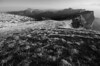 FK-ACH316-1608fPK-0783 (k00d'z00m) Tags: paysagesnaturels france auvergnerhônealpes sainthilaire dentdecrolles flickr auvergnerhã´nealpes