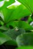 PhoTones Works #9007 (TAKUMA KIMURA) Tags: photones takuma kimura 木村 琢磨 sigmasd quattoro h landscape natural frog 風景 景色 自然 かえる 蛙