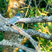 Kingfisher Breakfast | July 2017