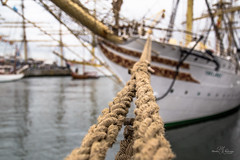 Mooring lines of Sørlandet (Monika Kalczuga (on&off)) Tags: sørlandet tall ship yacht boat jachten jacht moored ropes lines denhelder saildenhelder2017 netherlands holland vessel nautical haven port harbour