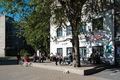 Beer at the Poodle (soilethecurious) Tags: estonia kalamaja poodlebar tallinn telliskivi beer