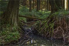 Am Waldbach (Robbi Metz) Tags: deutschland germany adelsbach bach creek wald forest landschaft landscape natur nature canoneos