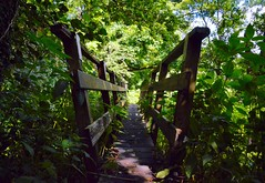 Bridge across a brook (rustyruth1959) Tags: nikon nikond3200 tamron16300mm uk woods england lancashire bridge woodenbridge wood riverribble stream brook path walkway ribblevalley ribbleway trees tree branches branch twigs leaf leaves undergrowth shadows river outdoor ribchester crossing footpath alamy