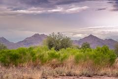 McDowell Mountain Range (Yavapai: Wi:kajasa) (Coisroux) Tags: mountains mcdowellmountainrange arizona scottsdale perserves saddlebackmountains sonoran dessert grasses trees nikond d5500 nikond5500 landscapes
