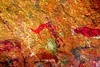 DSC06214 - NAMIBIA 2017_lxx (HerryB) Tags: 2017 southafrica afrique afrika namibia namib südwest sonyalpha77 sonyalpha99 tamron alpha sony bechen heribert heribertbechen fotos photos photography herryb rockart rockpaintings peintres rupestres san zeichnungen felszeichnungen höhlenmalerei paintings bushmen buschmänner dstretch harman jon jonharman enhance falschfarben restauration digitalenhanced enhancement verwitterung granit granite weathering brandberg shelter überhang whitelady tsisab brandbergmassiv schlucht tal