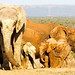Elephants standing together and having fun