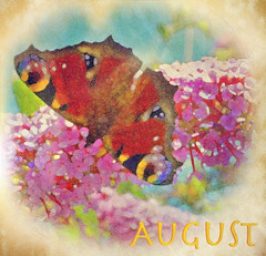 August 2017 AMG Bookmark (virtually_supine) Tags: texture textures blurred lowcontrast highquality amgbookmarkaugust2017 digitalartwork photomanipulation creative vividcolour text butterfly peacockbutterfly buddleia photoshopelements13mac layers effectsdrybrushpaintdaubsdissolve texturesdappledsunlightonawallgoldennoise vintage fromthekitchenwindow serendipity