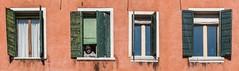 Peeking Wisdom (Nick Koehler Photography) Tags: rome venice florence travel travelphotography streetphotography street explore adventure siena photography passion people landscape cityscape city citylife