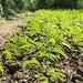 Experimentation garden