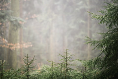 Fading (desomnis) Tags: foggy mist fog haze forest woods wood woodland trees bokeh dof depthoffield 135mm canon135mmf20 canon135mm 6d canon6d canoneos6d desomnis mühlviertel böhmerwald bohemianforest oberösterreich upperaustria austria österreich foggymood