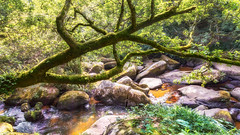 Abre Chaos Gouet (Thaurin Geoffrey Photographie) Tags: canon france paysage landscape nature green tree bretagne abre foret forest riviere eau water sun soleil