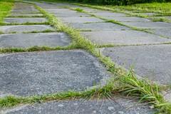 Nature Recaptures (Foto-Gunar) Tags: gras beton rostock mecklenburg vorpommern concrete weg path sidewalk city stadt canon line square linien quadrate platten grün grau green gray