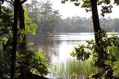 Eden Gardens State Park, Florida (fisherbray) Tags: fisherbray usa unitedstates florida waltoncounty pointwashington edengardens statepark canon eosrebel eosrebelt6 tuckerbayou water wasser choctawhatcheebay