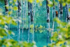 (tsuntsun3) Tags: hokkaido japan blue pond green spring 301a2411