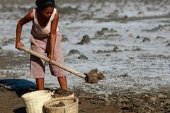 Salt making in Ulmera - 17-09-09-6 (undptimorleste) Tags: timorleste hard labor pans salt seaseaslat ulmera woman women work