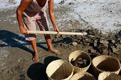 Salt making in Ulmera - 17-09-09-2 (undptimorleste) Tags: timorleste hard labor pans salt seaseaslat ulmera woman women work
