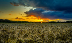 After Rain (andreasmally) Tags: harvest clouds sunset rain wolken sonnenuntergang sonne