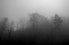 Forest in fog (ngbrx) Tags: switzerland schweiz suisse svizzera fog forest wald bäume trees nebel winter bern bernese berner berne brienz oberland