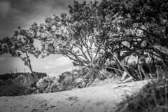 Untitled (nicinico) Tags: dunes duinen canon canond600 people nature black white colours d600 600d water trees landscape netherlands nederland nederlandvandaag clouds cloud wolken amazing lovely love best day bestoftheday