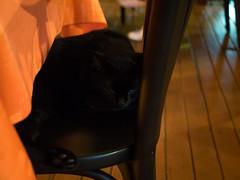 P7151045 (tatsuya.fukata) Tags: thailand samutprakan cabanagarden restaurant italian food aniaml cat