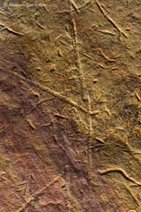 La piel de Gaia./ Gaia's skin. (Recesvintus) Tags: stone rock piedra roca erosion erosionada eroded macromondays memberschoicetexture tamronadaptallsp90mmf25macro52b