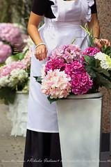 Ribadeo Indiano (2ª parte) (MarCaLo) Tags: ribadeo lugo flores indiano comercio gente retrato sony hortensias