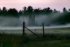 Fence in the Fog (jenna.lindquist) Tags: fence fencepost farming canon canon70200f28lll canon5dmarkiii dark field grass green forest landscape landscapephotography mystical naturephotography northwoods nature northernwisconsin outdoors oasis photography rain stormy clouds fog foggy mist misty sky wisconsin weather