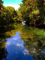 Manatee Springs, Florida (Andy Montgomery) Tags: suwannee nature florida springs
