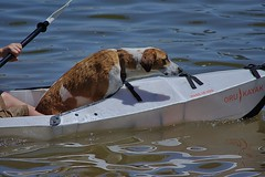 Dog In Kayak (swong95765) Tags: kayak river water paddle dog canine animal pet cute recreation