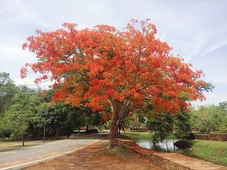 ayutthaya - thailande 3