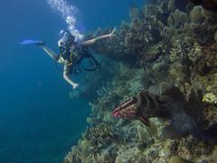 Abaco-7087537 (smithjustind) Tags: abaco bahamas diving sailing scuba snorkeling