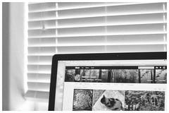 Photostream (h_cowell) Tags: praktica analogue 135mm pentacon film filmisnotdead filmphotography believeinfilm grain grainy hp5 window light blinds computer blackandwhite monochrome indoor