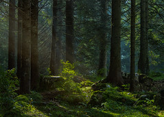Forest (SophieHazel) Tags: natura nature landscape forest woods bosco foresta paesaggio green magic enchanted lights