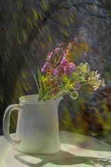 Happy Sunday (evisdotter) Tags: vase vas bouquet sommarblommor icm 2in1 myart light shadow summer