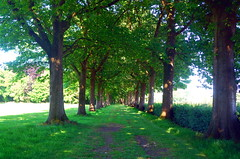 The Trees (Heather's Reflections Photography) Tags: trees hall tree tunnel trunks green grass meadow nature road path pathway netherlands europe helvoirt noon day daylight afternoon light underneath growing branches hedge hedges outdoors outside peaceful picturesque beautiful natural