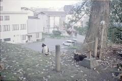 kyushu-0189 (Sofa!) Tags: fukuoka