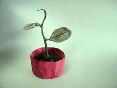 Sprout - Riccardo Foschi (Rui.Roda) Tags: origami papiroflexia papierfalten plant sprout riccardo foschi