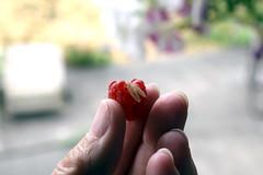 Be free! (Donna's View) Tags: nikon d3300 bug raspberry