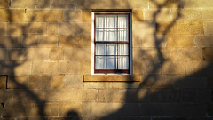 Golden Sandstone (Theen ...) Tags: branches curtains golden hobart lateafternoon lumix sandstone shadow slanting sun theen trees walls window