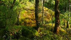 Eden (Fred&rique) Tags: lumixfz1000 raw nature paysage jura cascade été tufs couleurs