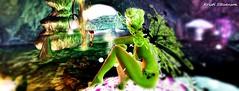 Faery Magic_012 (kristi Stevenson (KC Photography and Graphic Art S) Tags: secondlife secondlife:parcel=islesofperversion faery fairey fantasy wings edited photoscape maitreya rose