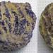 Platycrinites sp. & Pentremites pulchellus (fluoritized crinoid & blastoid fossils) (Mississippian; near Cave-in-Rock, Illinois, USA)
