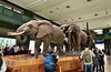 Akeley Hall of African Mammals in the American Museum of Natural History (maaachuuun) Tags: akeleyhallofafricanmammals museumofnaturalhistory elephants rooselvelt carlakeley taxidermy diorama newyork manhattan nyc amnh