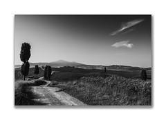 the way it is (Karl-Heinz Bitter) Tags: monochrom monochrome schwarzweiss blackwhite landscape landschaft toskana tuscany pienza baum weg himmel sky cloud