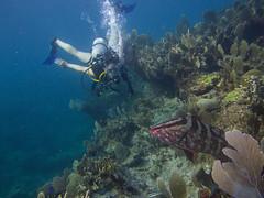 Abaco-7087534 (smithjustind) Tags: abaco bahamas diving sailing scuba snorkeling