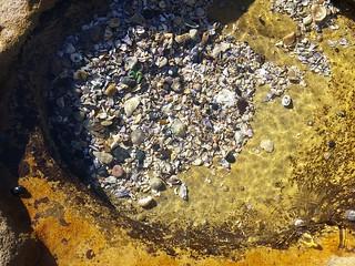 bare island rock pool